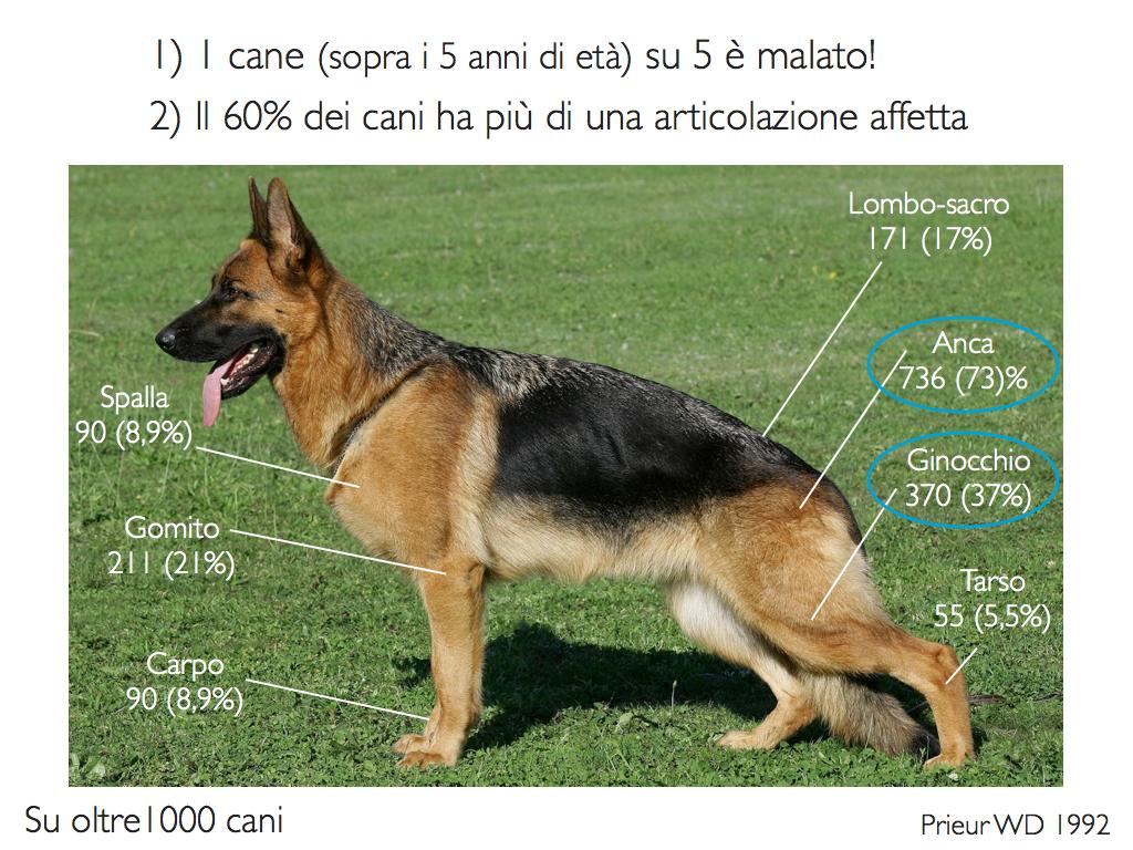 Diffusione dell'osteoartrosi nei cani.
