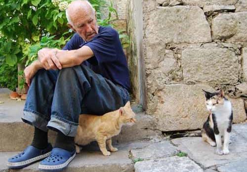 meno infarti grazie ai gatti - michele d'amato veterinario