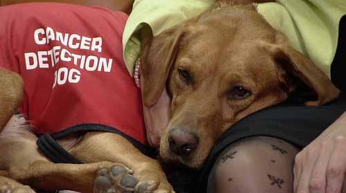 tumori della tiroide diagnosi con i cani - michele d-amato 02