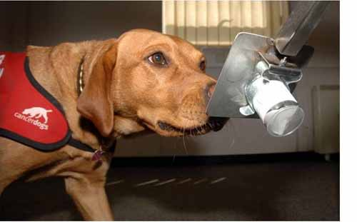 tumori della tiroide diagnosi con i cani - michele d-amato 03