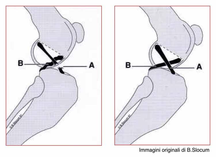 rottura-del-legamento-crociato-craniale-michele-damato-03