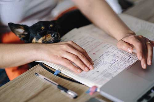 il cane imita i gesti del padrone 02 - michele d'amato