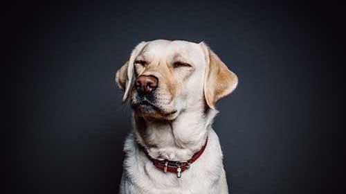 il cane imita i gesti del padrone - evidenza - michele d'amato